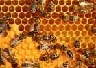 Rahasia Melia Propolis Lebah Dalam Al-Quran